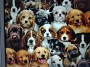 Suche kl Hunderassen Mix bis
