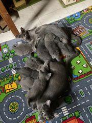 Katzenbaby Katze Babys