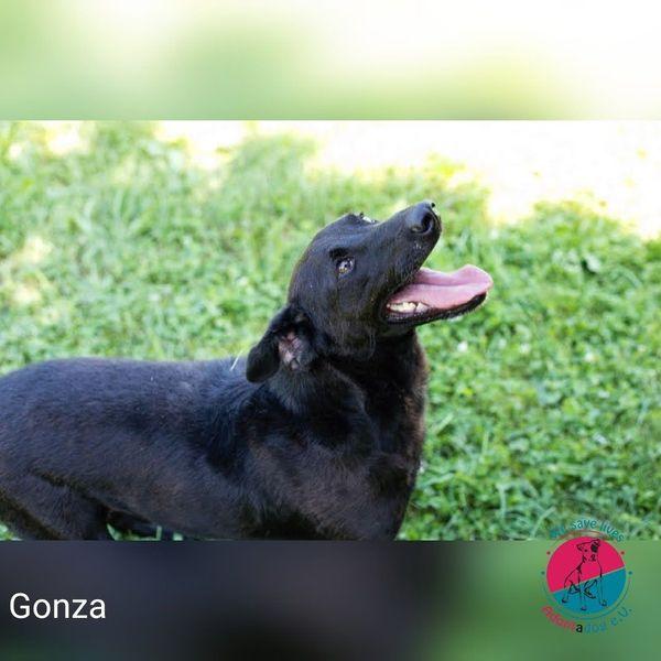 Gonza - Bewegungsmotivator sucht Menschennähe