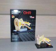 Anatomie-Modell Ohr 14 Teile Super