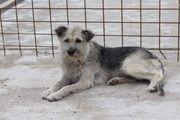 Liebe Hundemama sucht ein Zuhause