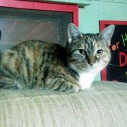 Kätzchen Tiffy wartet auf ihre