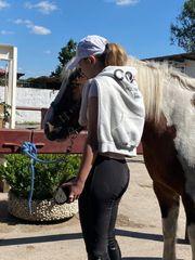 Erfahrene Reiterin sucht Reitbeteiligung