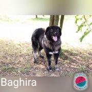 Baghira - ist der Balu unter