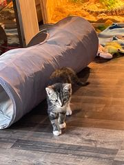 EKH Baby Katze