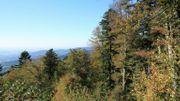 Suche abgelegenes Waldgrundstück im Umkreis