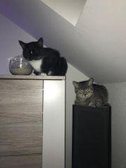 Marly und Mia suchen dringend