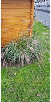 Gras klein