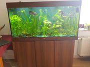 Aquarium 350L komplett Verkauf mit