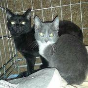 Katzenschwestern Colina und Viona suchen