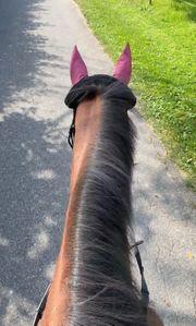 Pferd sucht pflegebeteiligung reitbeteiligung