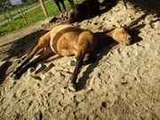 Das Pferdehöfle sucht Verstärkung