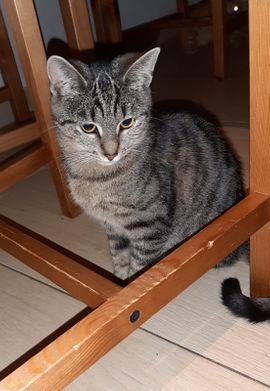 Wunderschöne Baby Katze Kitten Kiara 6 Monate kastriert geimpft gechipt sucht ihr Zuhause!!!