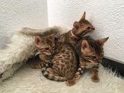 süße Kätzchen suchen neues Zuhause
