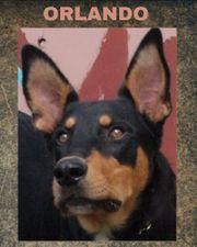 Familienhund ORLANDO - zart und lieb