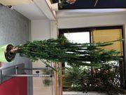 Euphorbia Wolfsmilch