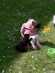 labrador sucht neus zuhause