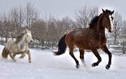 Pferdehof Resthof oder ähnliches gesucht