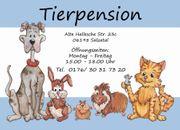 Hundehaltung und-entwicklung verstehen lernen Seminar