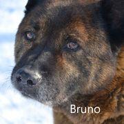Bruno geb 2009 Senior sucht