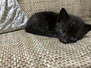 KEIN VERKAUF Katzenbaby Handaufzucht KEIN
