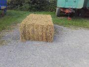 Verkaufe Weizen Stroh Gute Qualität