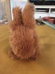 Kuscheltier Hase zu verkaufen