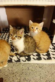 kleine Kater Baby Katze Kätzchen
