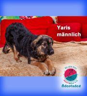 Yaris- zeigt uns hier wie