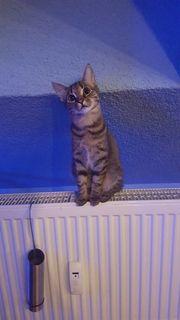 Katze mit Zubehör