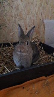 Süße Kaninchen zu Ostern
