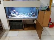 Meerwasser Aquarium Komplett Korallen