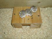 Haus aus Holz für Hamster