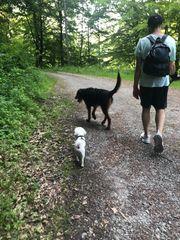 Hundebetreuung Urlaubsbetreuung Gassi-Service Spiel-Service