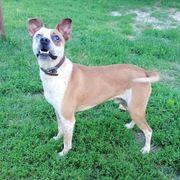 Kajla aktiver teils unsicherer Hundemann