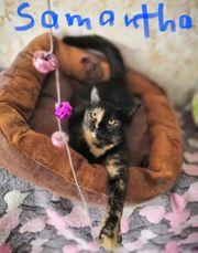 freundliches Katzenmädchen Samantha Katze 8