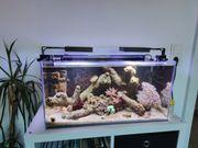 Meerwasseraquarium 54L komplett