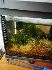 Nano Aquarium mit Besatz