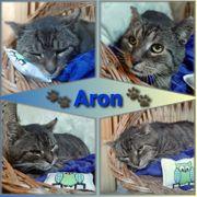 Wunderschöner Kater Aron 2 Jahre
