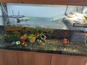 Aquarium Aquaterrarium