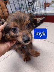 Mini Myk 4 Monate sucht