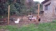 Biete Lebensplätze für Hühner