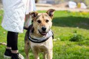 Tierschutzhund Julia sucht ein Zuhause