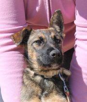 BONGUITA - junges aufgewecktes Hundemädchen sucht