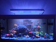 Meerwasser Aquarium Weissglas 130x55x50 400l