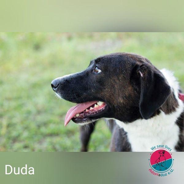 Duda - Sucht noch ihren Buddy