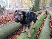 Dongo-lieber Junghund sucht seine Familie
