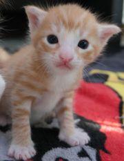 Wunderschöne Mix Kitten Mädchen und