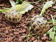 Schildkröten Babys aus 2020