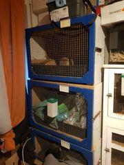 kaninchenboxen samt Zubehör